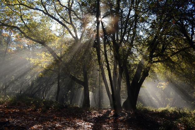 Airhouses - Scotland's Fascinating Tree Folklore