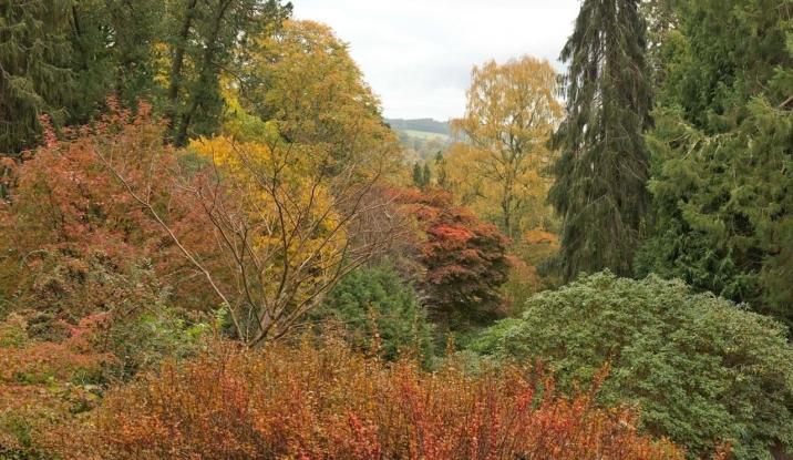Dawyck is awe-inspiring in autumn