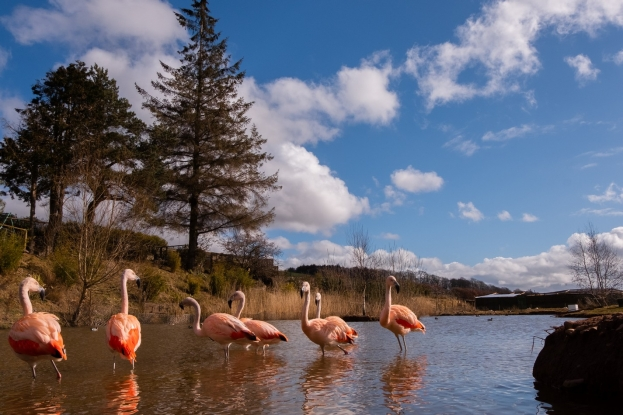 Where can you find flamingoes in the Scottish Borders?