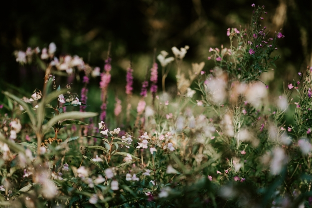 Fancy a gin crafted from Scottish wildflowers?